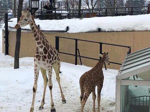 zoo asahikawa4
